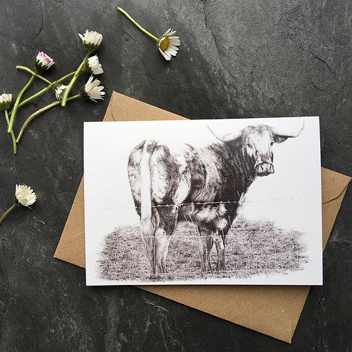 Longhorn cow greeting card 'Longhorn'