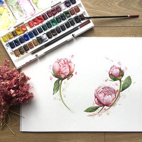 'Peonies' Original Watercolour
