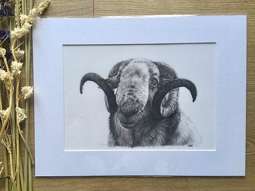 Ram giclee print | Baa ram ewe
