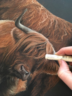 'Highland Gaze' Pastel Drawing