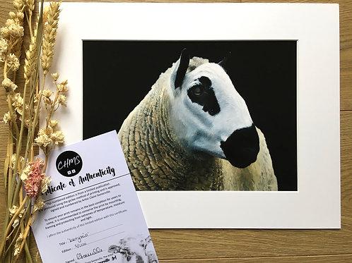 Kerry Hill sheep gicleé print