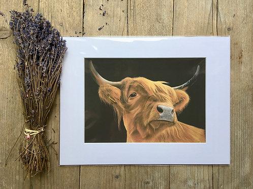 'Highland Cow giclee print | Highland Coo