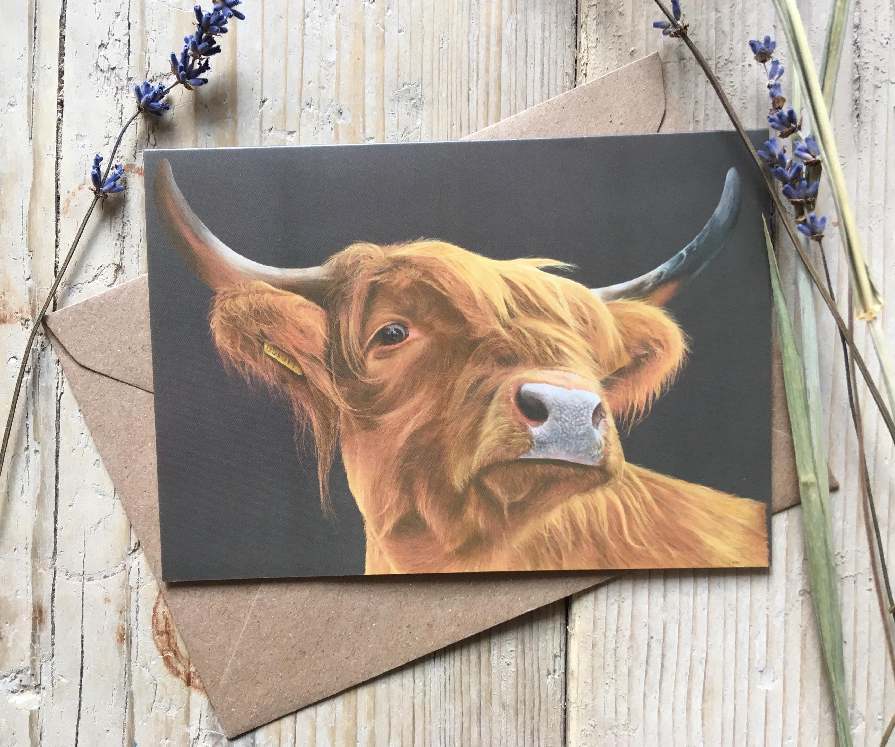 Highland Cow 'Always Watching'