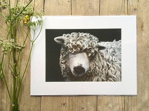 Greyface Dartmoor Sheep giclee print | Curly