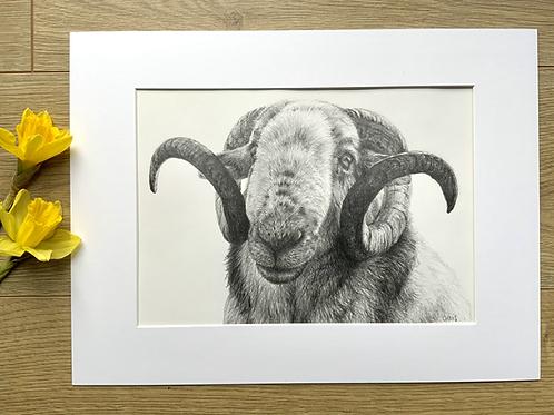Ram original pencil drawing | 'Baa Ram Ewe'
