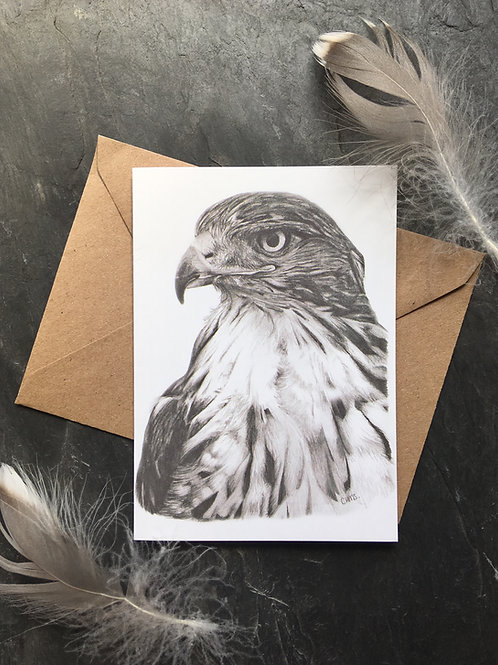 Bird of prey greeting card 'Eyes on'