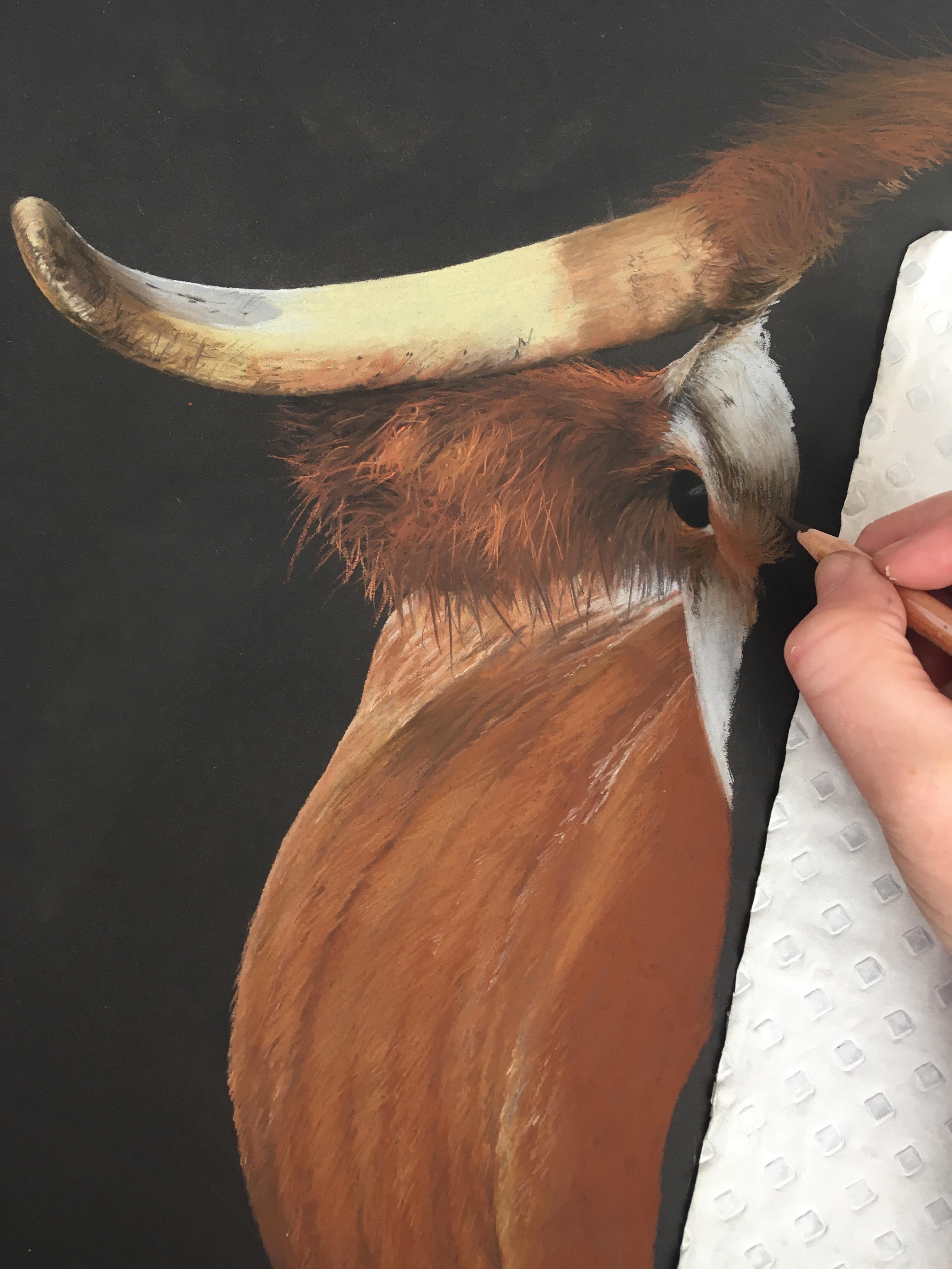 'Longhorn Cow' Pastel Drawing