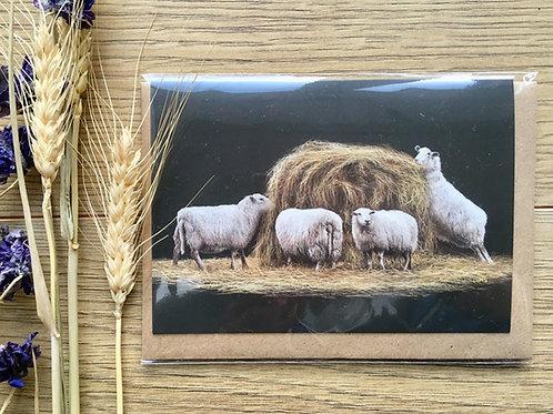 Sheep greeting card 'Haybale'