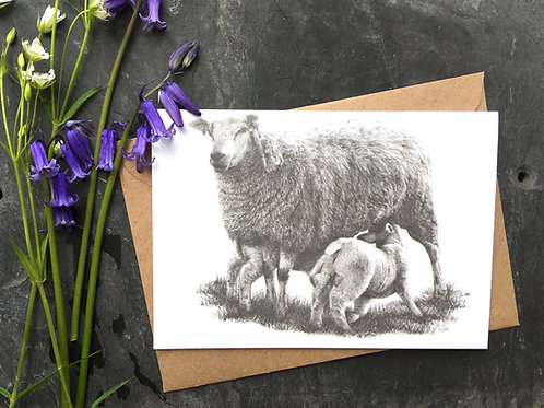 Sheep Greeting Card 'Mothers Delight'