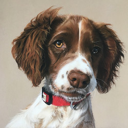 Original Pastel Drawing | Spaniel 'Mol'