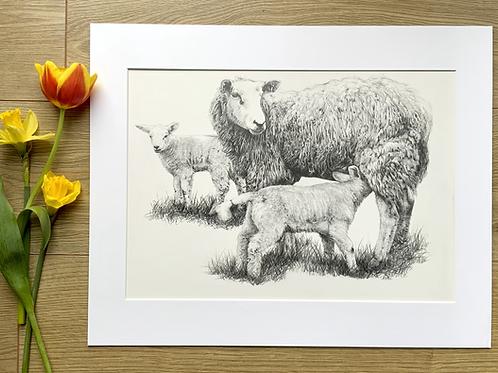 Sheep original pencil drawing | 'Watchful eye'