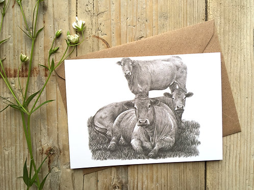 Limousin Cattle Greeting Card