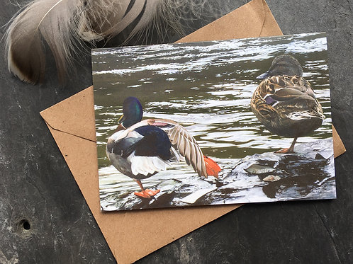 Duck greeting card 'Lazy river days'