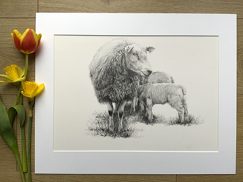 Sheep original pencil drawing | 'Contentment'