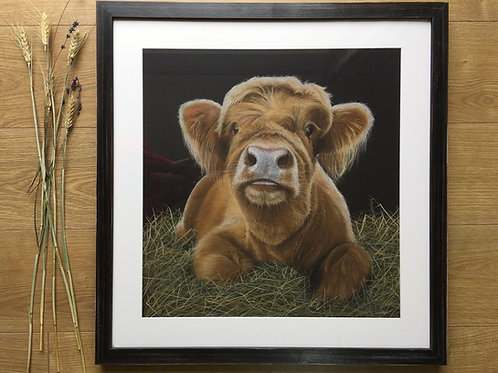 'Bear' Highland Calf original Pastel drawing