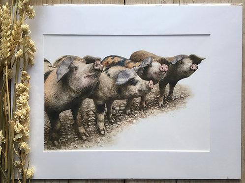 Gloucester pigs gicleé print | Pinky, Perky, Porky and Pie