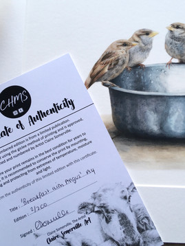 House Sparrows 'Breakfast with Angus'
