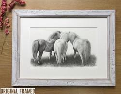 Shetland ponies 'Horse Whispers'