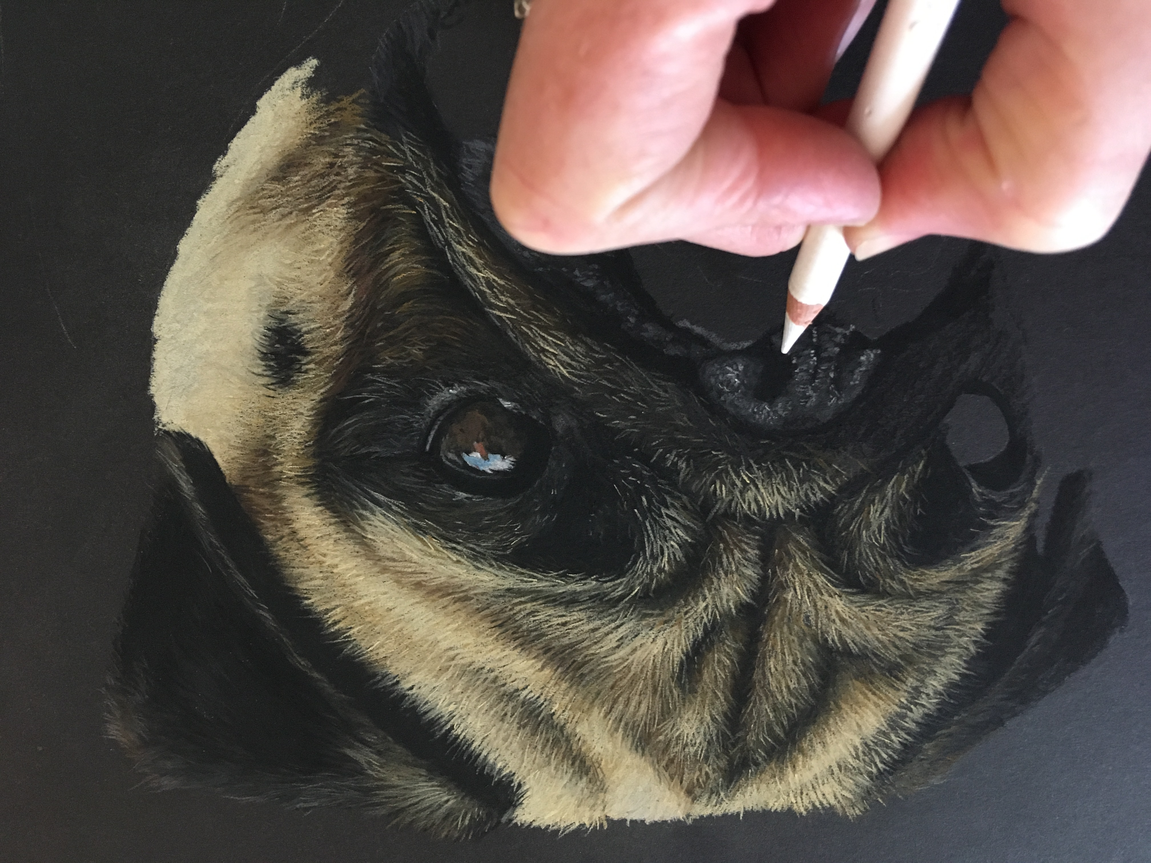 'Doug' the pug Pastel Drawing