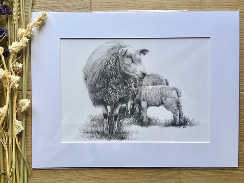 Sheep giclee print | Contentment