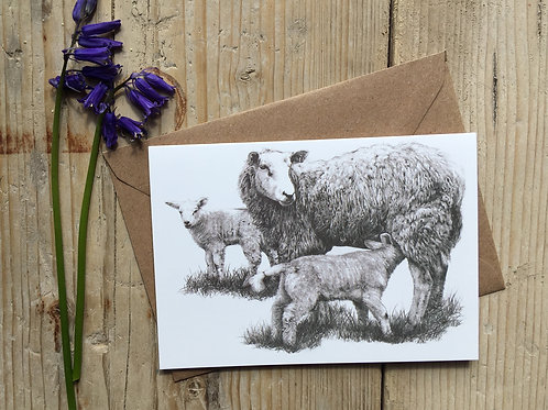 Sheep Greeting Card 'Watchful Eye'