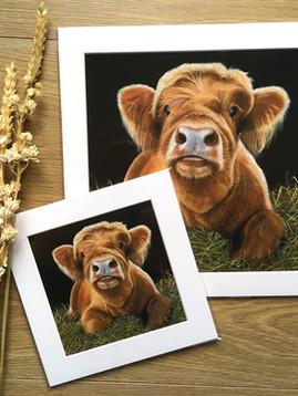 "'Bear' Highland Calf Mini and 12"""