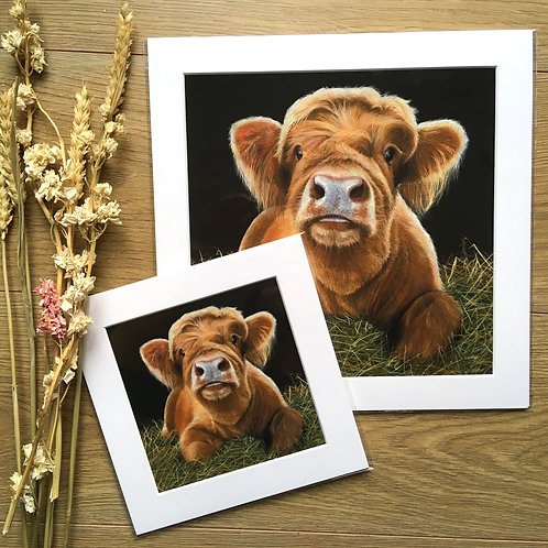 'Bear' Highland Calf giclee print