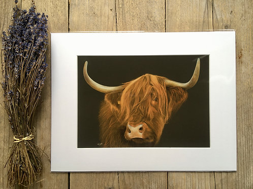 Highland Cow giclee print | Always Watching