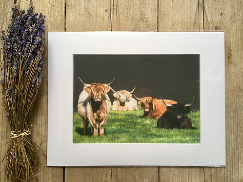 Highland cattle giclee print | Spoilt for choice