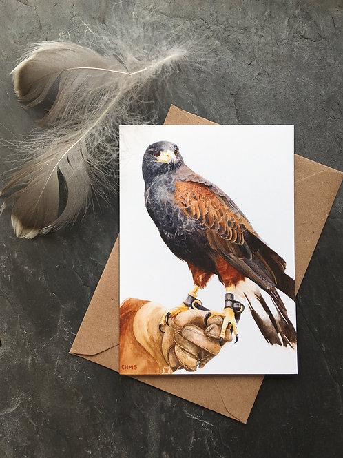 Harris Hawk greeting card 'Harris Hawk'
