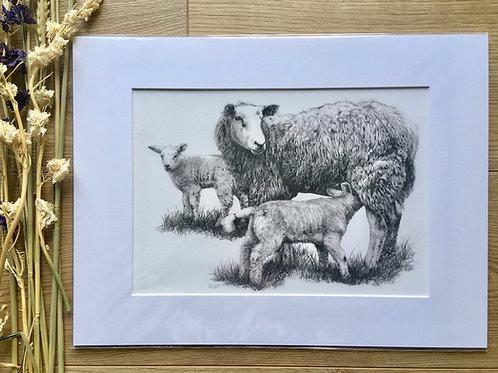Sheep giclee print | 'Watchful Eye'