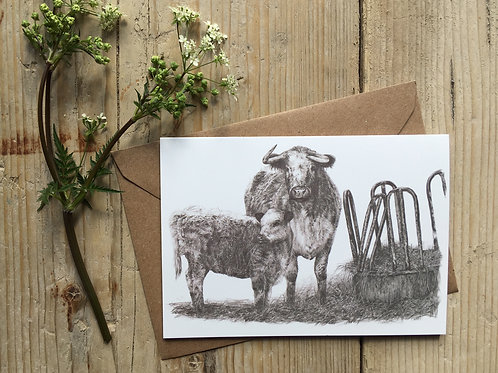 Longhorn cow and calf greeting card
