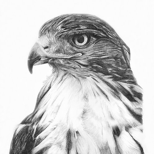 Bird of prey giclee print | Eyes on