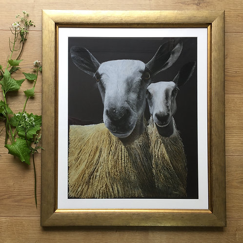 Bluefaced Leicester sheep original pastel drawing | Double trouble