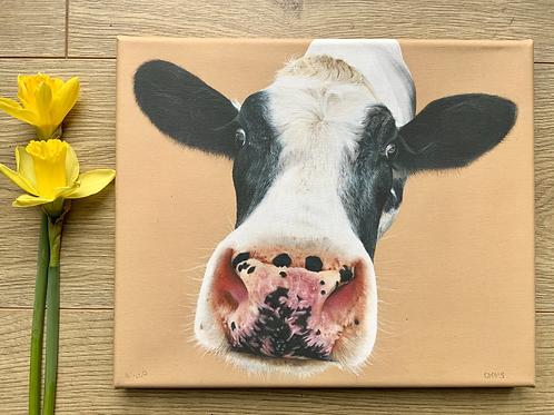Cow Gicleé Canvas Print 'Nosey Moo'