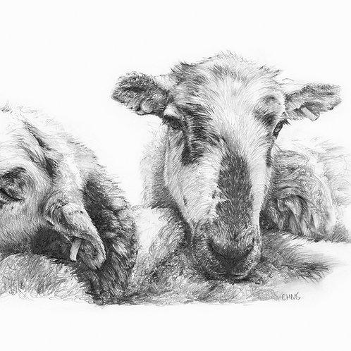 Sheep giclee print | lean on me