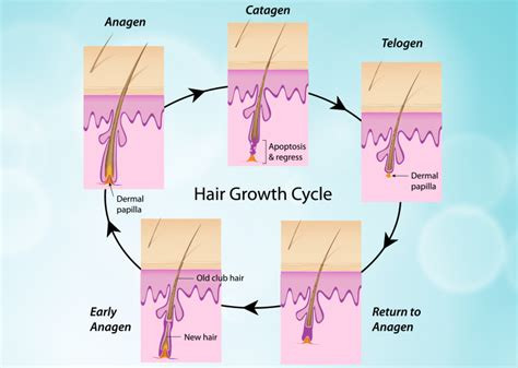 hair growth for waxing