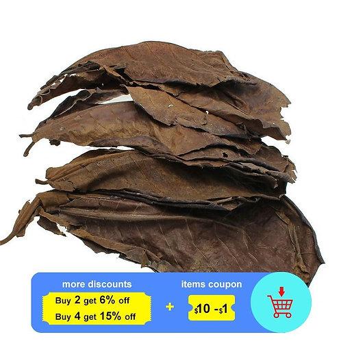 10pcs Natural Leaves for Aquarium Water to Balance PH Acidity