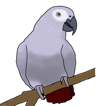African Grey.png