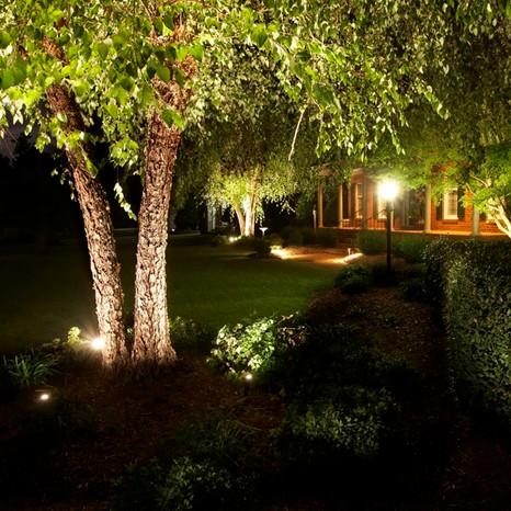 Lighting-Bz-riverbirch.jpg