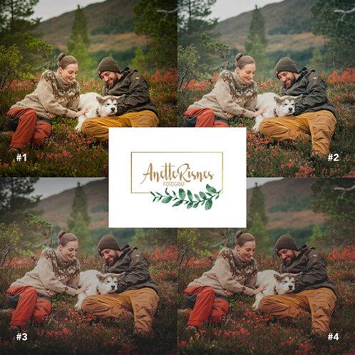 The Moody Autumn Collection (Desktop)