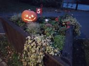 Halloween pumpkin hunt
