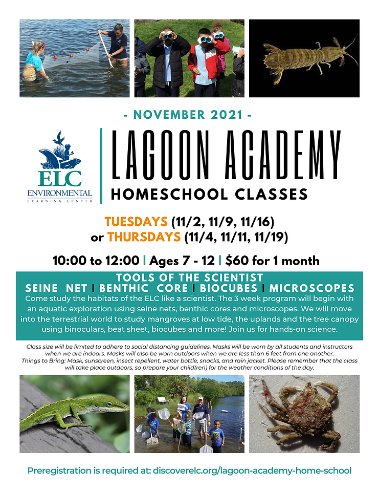 Lagoon Academy Nov 2021.png