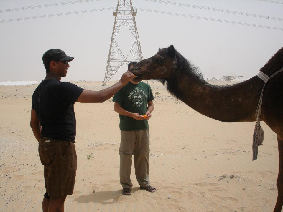 Feeding the Camels.
