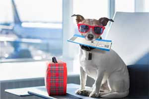 Small dog in airport with red sunglasses and plane tickets for Orlando Limo Airport Transportation