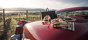 Wine and bread on top of car near winery for wine tour with Orlando Limo