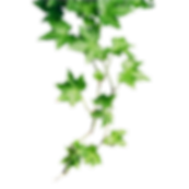 ivy-png-hd-24.png