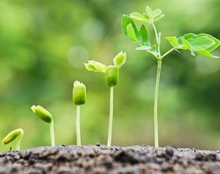 Growth is a process it does not happen overnight