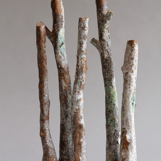 forest 5 troncs