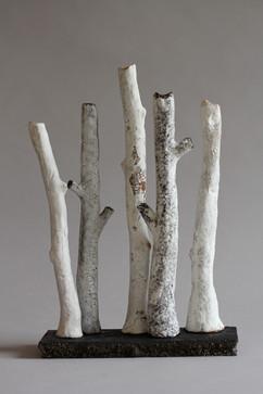 sherwood forest white